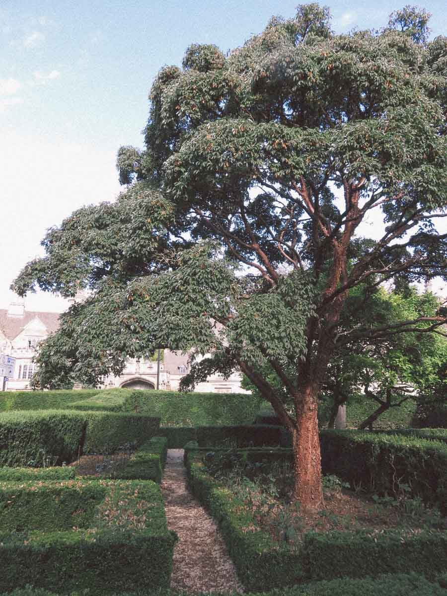 Hampstead Pergola and Gardens