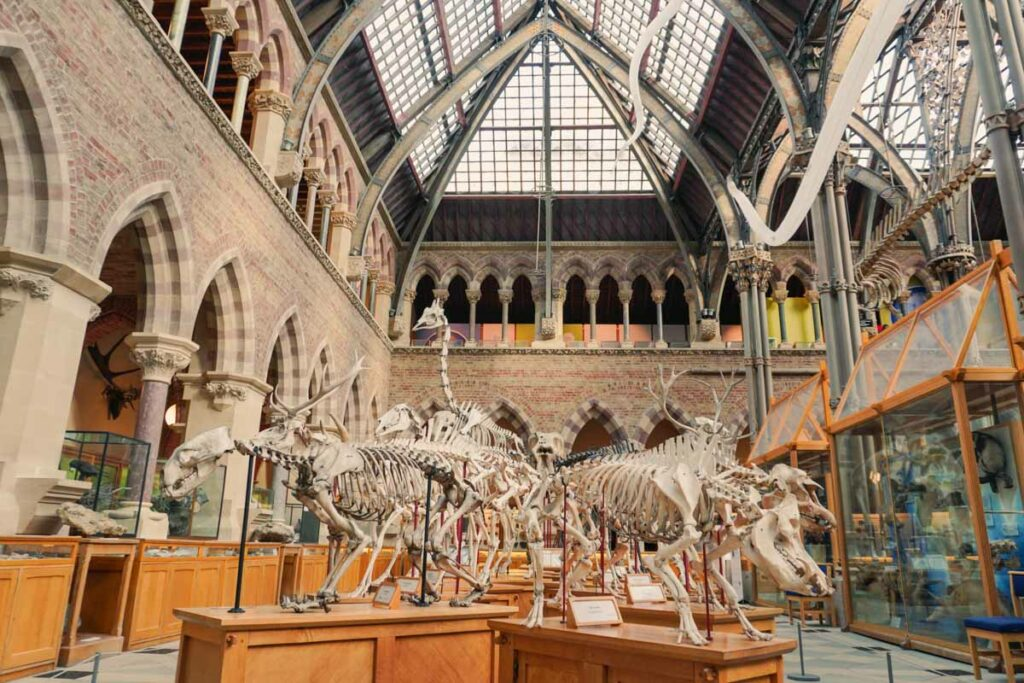 Museum of Natural History Oxford 3